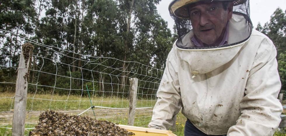 Un apicultor de Villaescusa denuncia la muerte masiva de abejas por el uso de insecticidas