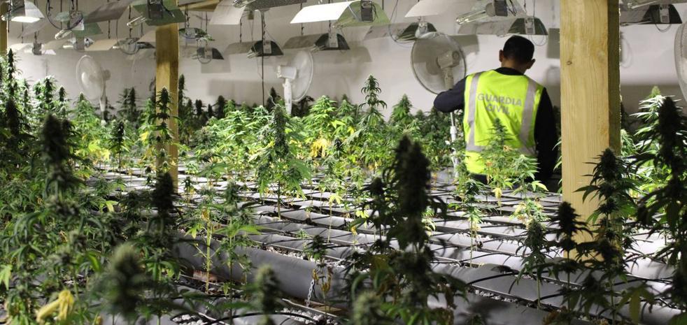 Nuevo récord de marihuana 'indoor' incautada en Cantabria
