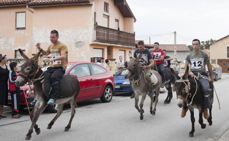 Los burros salvan la fiesta de Tanos