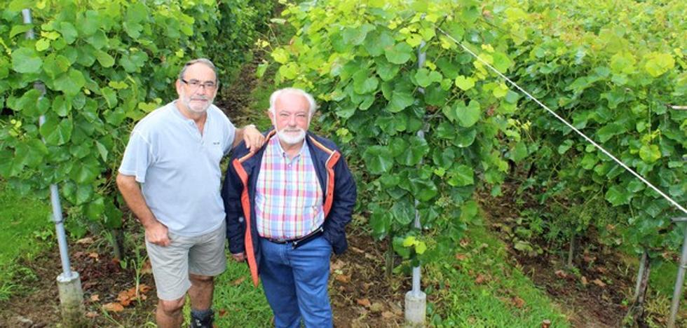 El viñedo con más solera está en Obregón