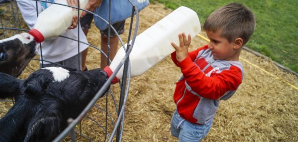 Una granja de vacas lecheras como escuela