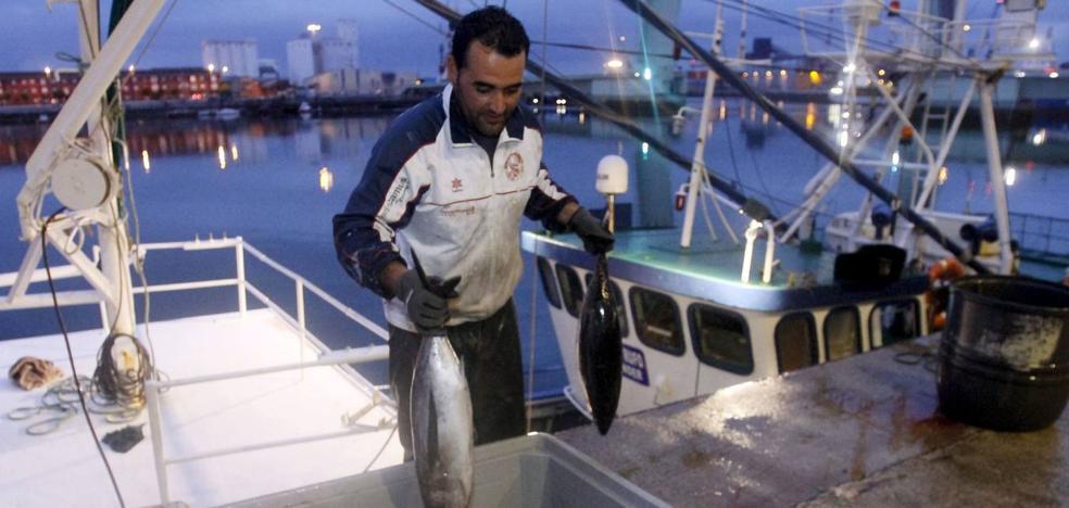 Los pescadores cántabros advierten de la amenaza del arrastre para el bonito