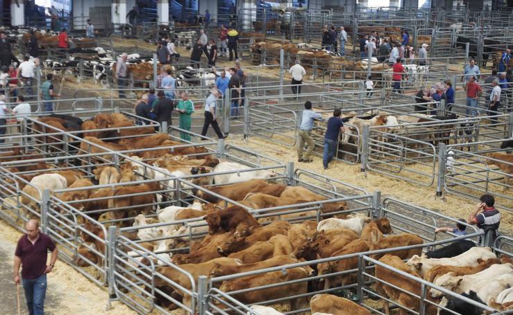 La Feria de Torrelavega reune a 2.319 reses