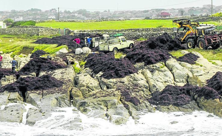 La caloca inunda la costa