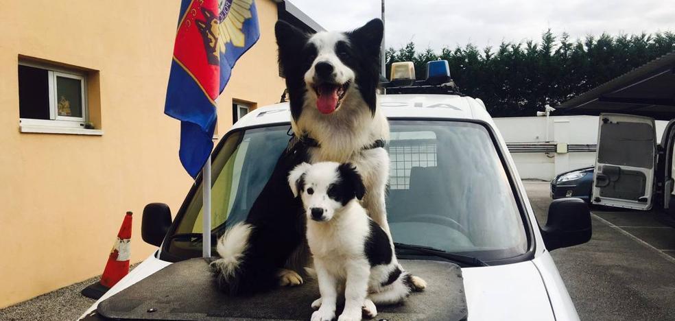 policía de nacimiento