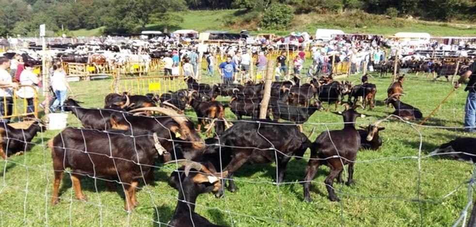 Más de 1.000 cabezas de ganado estarán éste sábado en la VII Feria de Riotuerto