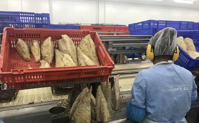 El Grupo Atunlo integra una planta productora de lomos de atún ubicada en Santoña