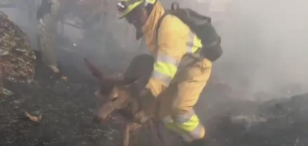 Los 'héroes' de Vendejo siguen trabajando en el único incendio activo en Cantabria