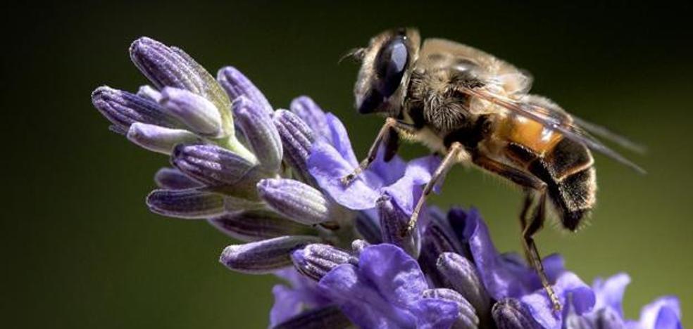 ¿Vamos hacia un mundo sin insectos?
