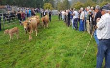 Coo reúne a más de 1.200 vacas en su primera feria de ganado