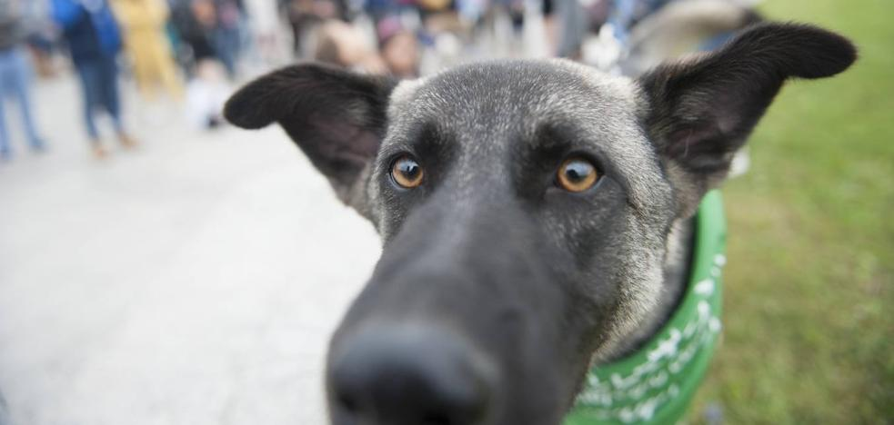 «La adopción de perros es la forma de salvarlos del 'corredor de la muerte'»