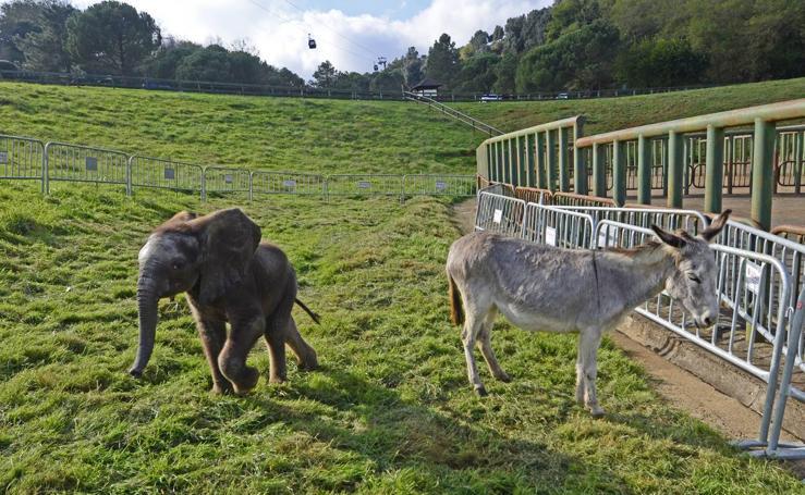 La elefanta y la burra