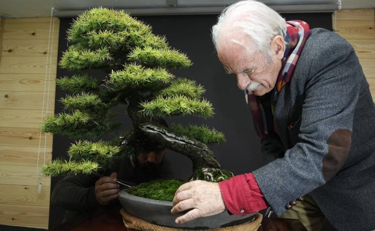 Los mimados bonsáis de Tomás Bustamante
