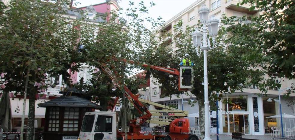 Los trabajos de poda de los árboles se prolongarán hasta diciembre