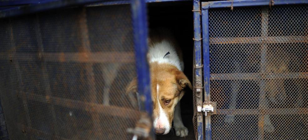 IU reclama el sacrificio cero en la ley cántabra de Protección Animal