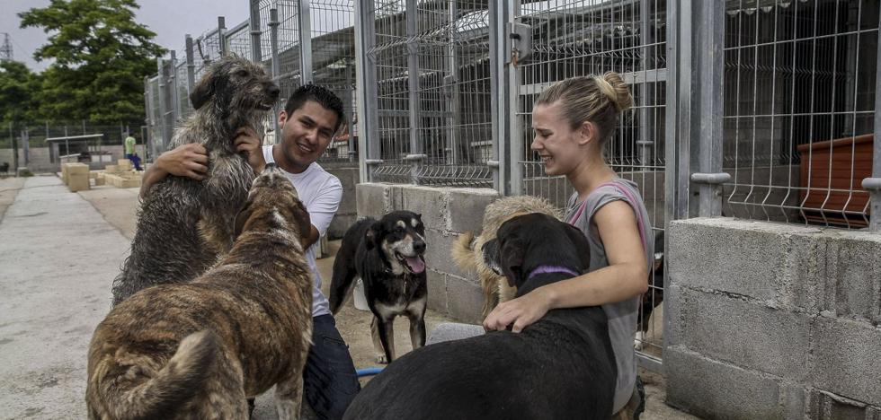 El anteproyecto de ley de protección animal no incluye el 'sacrificio cero'