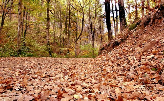 Comienza la XXIX Semana de Ecología y Medio Ambiente del Barrio Covadonga