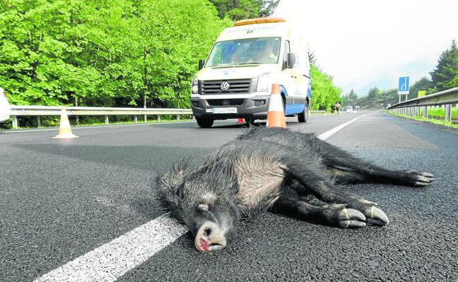 La invasión de la carretera por animales causa una media de un accidente al día en la región