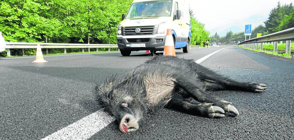 La invasión de la carretera por animales causa una media de un accidente al día en la región