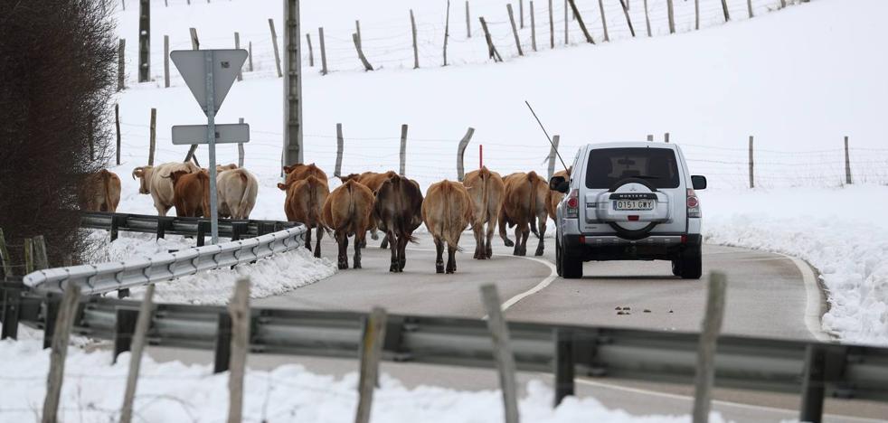 Ganaderos y agricultores celebran los efectos de un temporal que mitiga la sequía