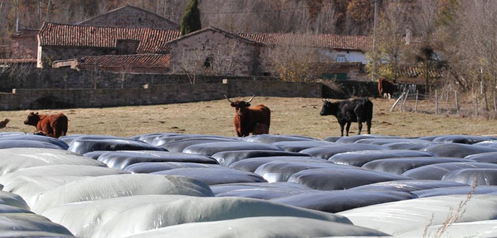 La sequía supondrá un desembolso extra para los ganaderos campurrianos