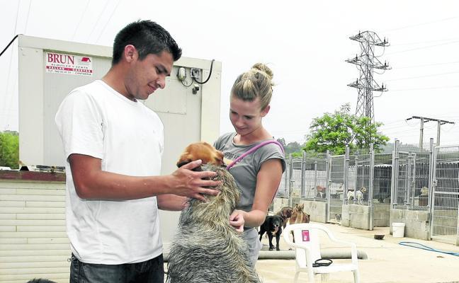 El contrato de la perrera municipal queda desierto por segunda vez