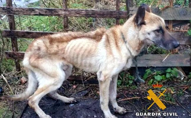 Detenido en Solórzano por tener un perro desnutrido atado a una cadena
