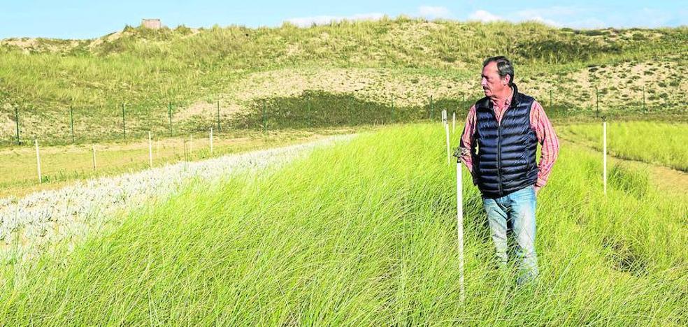Semillas para salvar las dunas