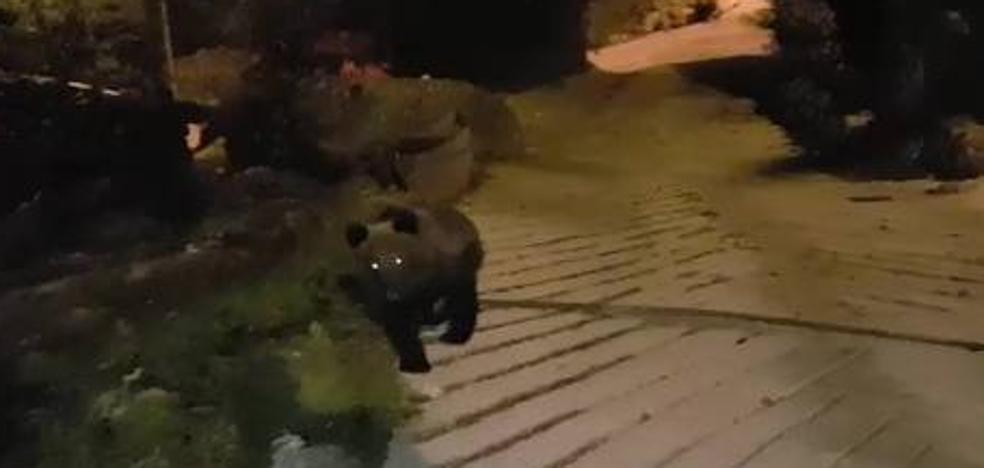 «La gente mayor no puede salir porque se encuentra al oso en cualquier sitio»