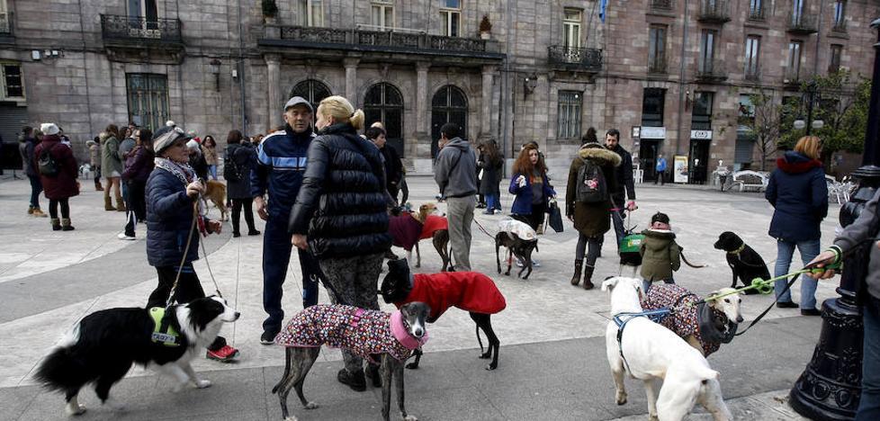 La ordenanza de bienestar animal se marcará plazos para el 'sacrificio cero'