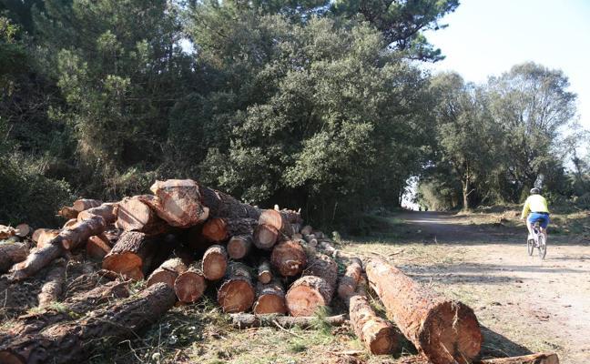 La Comisión de Urbanismo rechaza legalizar la tala de árboles en el bosque de Loredo