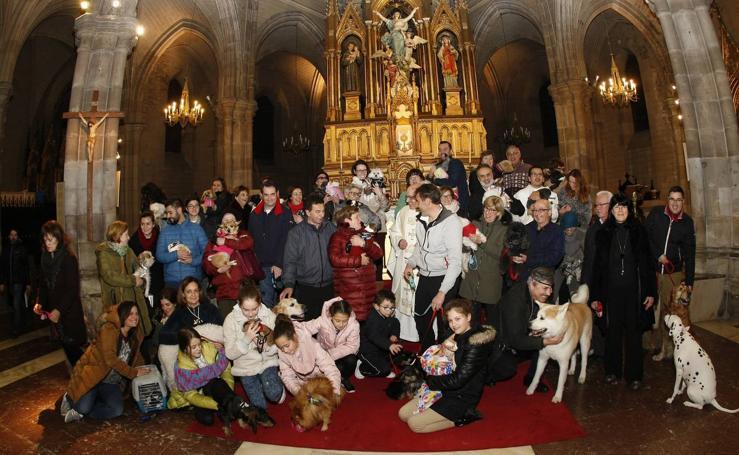 La bendición para las mascotas de Torrelavega el día de San Antón
