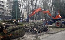 La cubierta del parque Manuel Barquín se realizará a pesar de las protestas por la tala de árboles