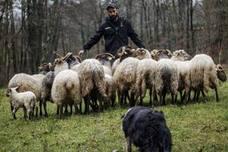 «El pastoreo es una herramienta útil y les ayuda a ser perros equilibrados»