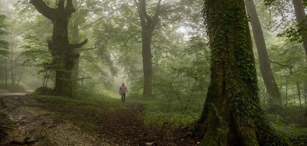 Cantabria prepara planes para proteger especies de la flora en peligro de extinción