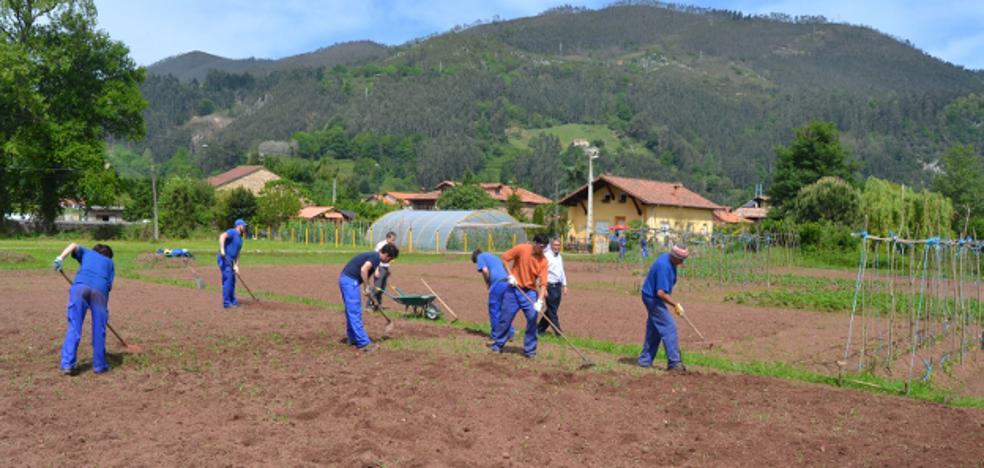 Los Corrales ofrecerá huertos cultivables a parados de larga duración