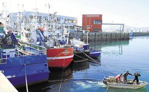 Los animalistas denuncian actos vandálicos en las colonias de gatos del puerto pesquero de Laredo
