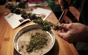 La Audiencia revoca la condena al presidente de un club de cannabis detenido con droga en Santander