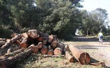 El Defensor del Pueblo interviene en el caso de la tala «ilegal» del bosque de Loredo