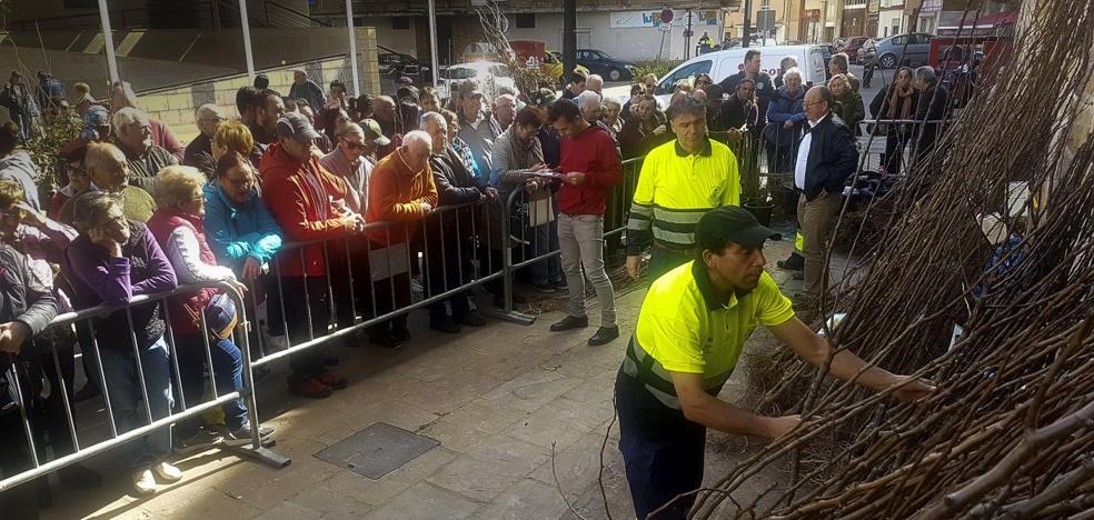 El Ayuntamiento de San Vicente entregó 900 árboles a sus vecinos