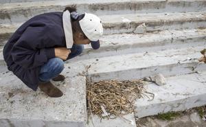Castro Urdiales licita el control de la población de gaviotas