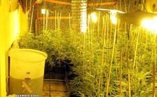 Desmantelado un cultivo 'indoor' de marihuana en una casa de Treto