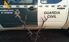 Denunciado un cántabro de 29 años por cazar un ciervo en Palencia sin acreditación legal