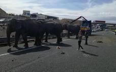 Elefantes sueltos en una autovía de Albacete