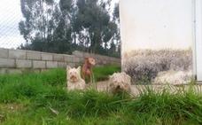 Encuentran en Sierra de Ibio a tres perros desaparecidos en Córdoba tres días antes