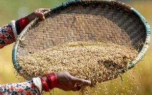 Las claves de la calidad del grano