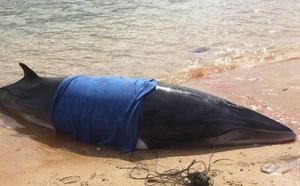 Una ballena de 6 metros vara en la playa de Bikini