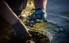 Prohibida la extracción de moluscos en toda la costa cántabra debido a la 'marea roja'