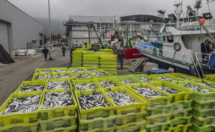 Entra en las lonjas de Cantabria un millón de kilos de bocarte