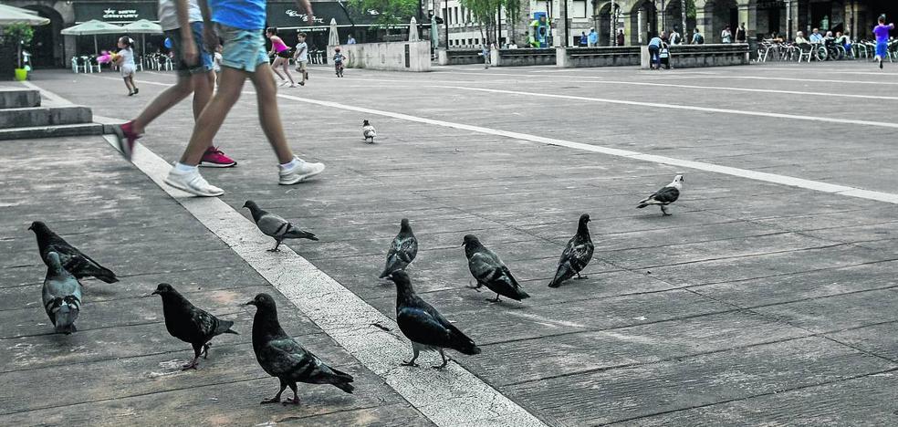 Los vecinos de Torrelavega muestran su malestar por la creciente proliferación de palomas